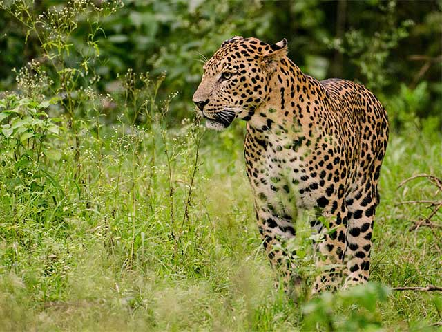 7 Best Places In India To See Leopards And Other Wild Cats