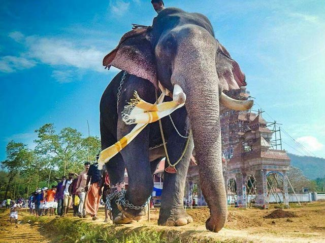 Why Is Kerala Mourning The Death Of An Elephant?