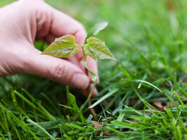 On Weed Appreciation Day, Here Are Some Healthy Weeds You Should Know Of