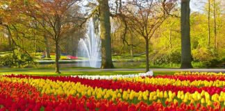 The Best Places To Go If You Love Flowers