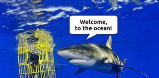 World Oceans Day: The Ocean And Its Weirdest Secrets