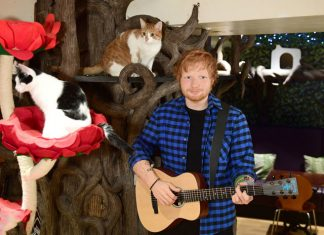 Ed Sheeran Wax Statue Starts Its Journey In This Unique Cat Cafe In London
