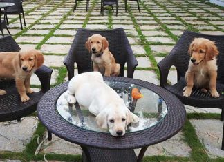 Aware Of The Pet-Friendly Cafés In Bangalore?