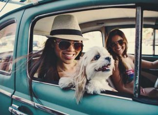 Ready For A Road-Trip With Your Pet? Here's All You Need To Keep In Mind