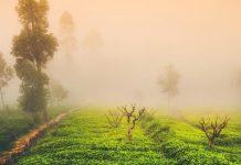5 Gorgeous Plantation Holidays In India