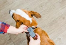 Now Tracking Your Faithful Friend And Keeping Him Fit Got Easier!