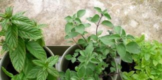 You Can Grow Your Own Herbs