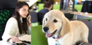 The Advantages Of Having A Pet-Friendly Office