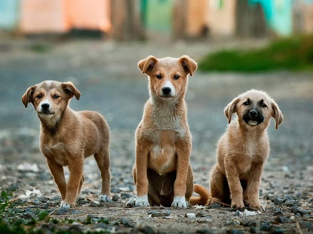 Every Citizen Should Know These Animal Rights For Strays In India