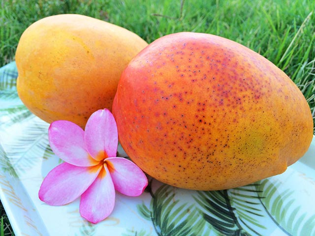 Did You Know The Mango Season Is Celebrated In A Big Way In Hawaii ?