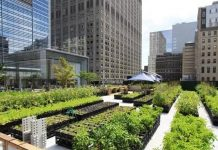 The Need For Urban Farming