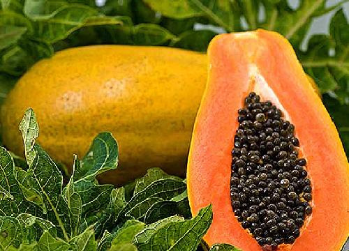 Papaya helps repair our digestive system.