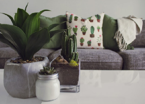 Indoor Plants on Coffee Table